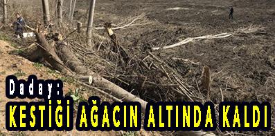 Daday: KESTİĞİ AĞACIN ALTINDA KALDI
