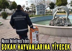 Abana Belediyesi'nden SOKAK HAYVANLARINA YİYECEK