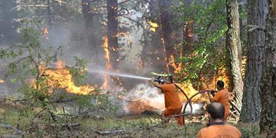 <center> Kargı'da Orman Yangını: </center><center><font color='blue'>1 ARAZÖZ YANDI, 3 KİŞİ YARALANDI </font></center>