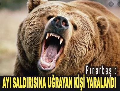 <center> Pınarbaşı: </center><center><font color='blue'> AYI SALDIRISINA UĞRAYAN KİŞİ YARALANDI </font></center>