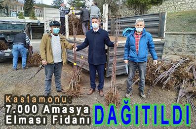 <center> Kastamonu: 7.000 Amasya Elması Fidanı </center><center><font color='blue'> DAĞITILDI </font></center>