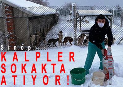 <center> Sinop: </center><center><font color='blue'> KALPLER SOKAKTA ATIYOR! </font></center>