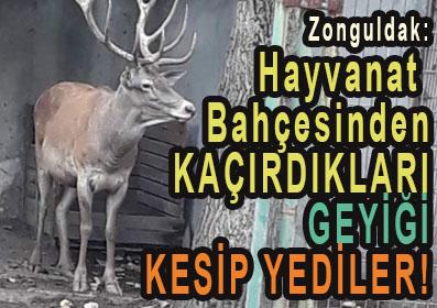 <center> Zonguldak: Hayvanat Bahçesinden KAÇIRDIKLARI GEYİĞİ </center><center><font color='blue'> KESİP YEDİLER! </font></center>