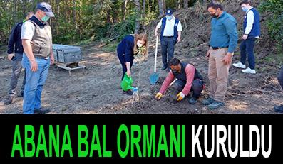ABANA BAL ORMANI KURULDU