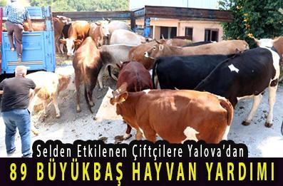 <center> Selden Etkilenen Çiftçilere Yalova'dan </center><center><font color='blue'>89 BÜYÜKBAŞ HAYVAN YARDIMI </font></center>