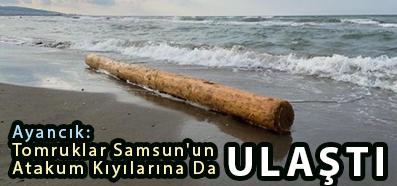 <center> Ayancık:  Tomruklar Samsun'un  Atakum Kıyılarına Da </center><center><font color='blue'> ULAŞTI </font></center>